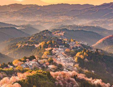 Hiking Tour in Nara