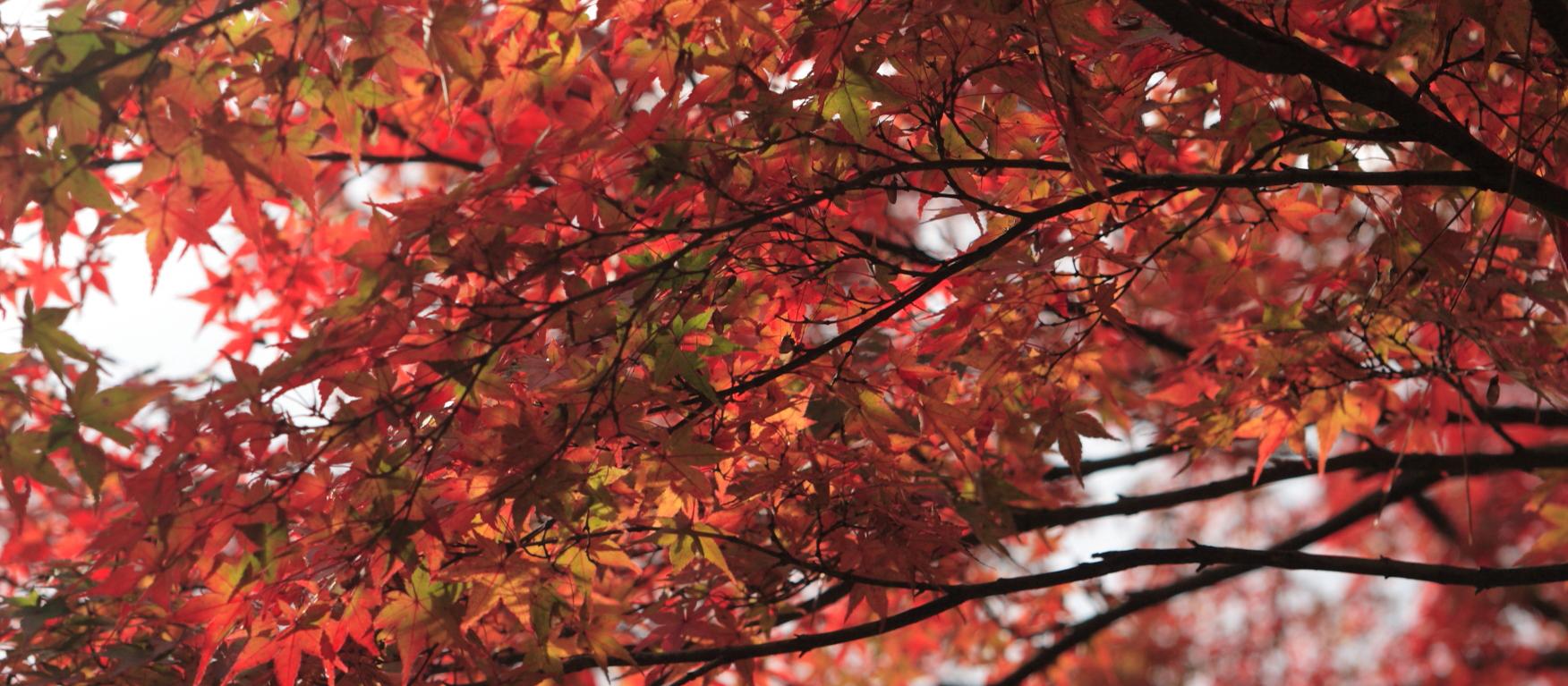 Serene Experiences in Autumn