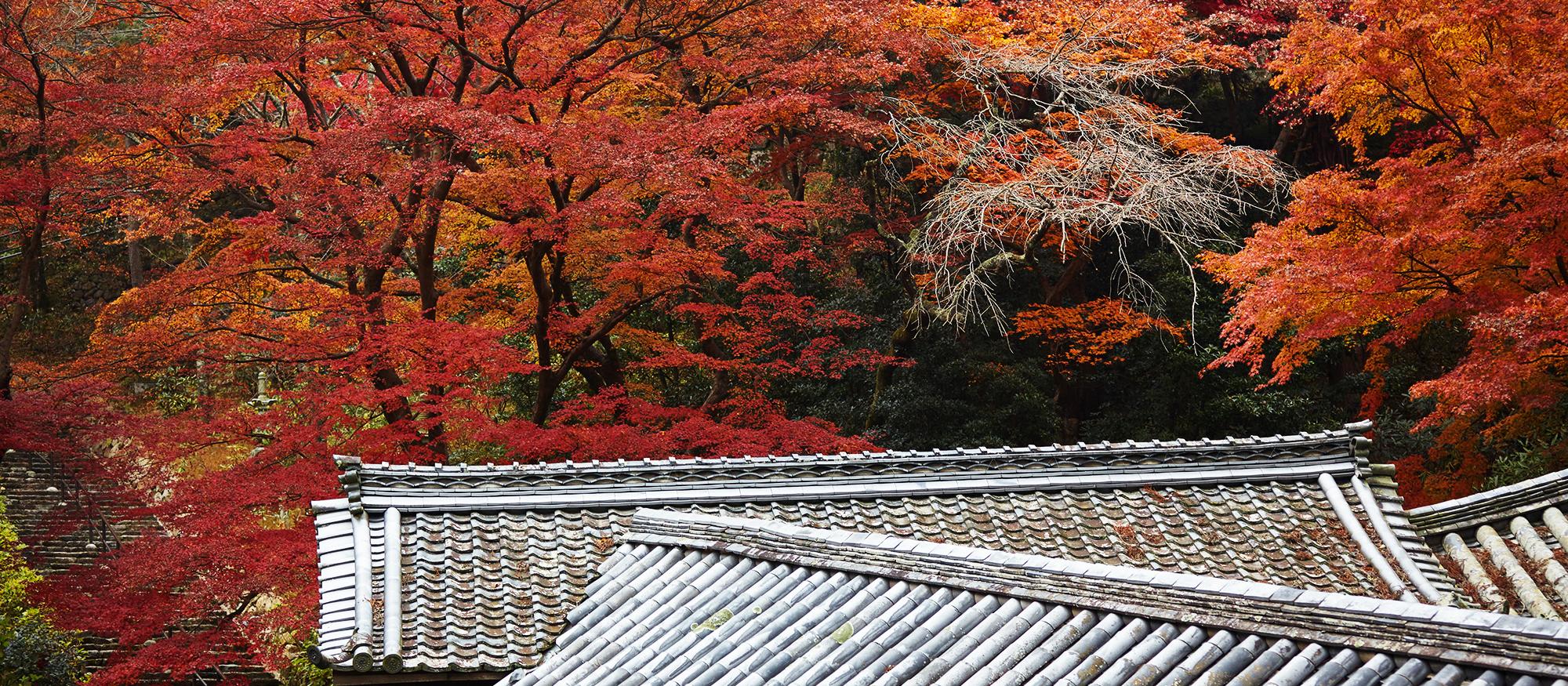 Luxury Autumn Leaves Tour