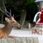 1-Day Nara and Uji Tour