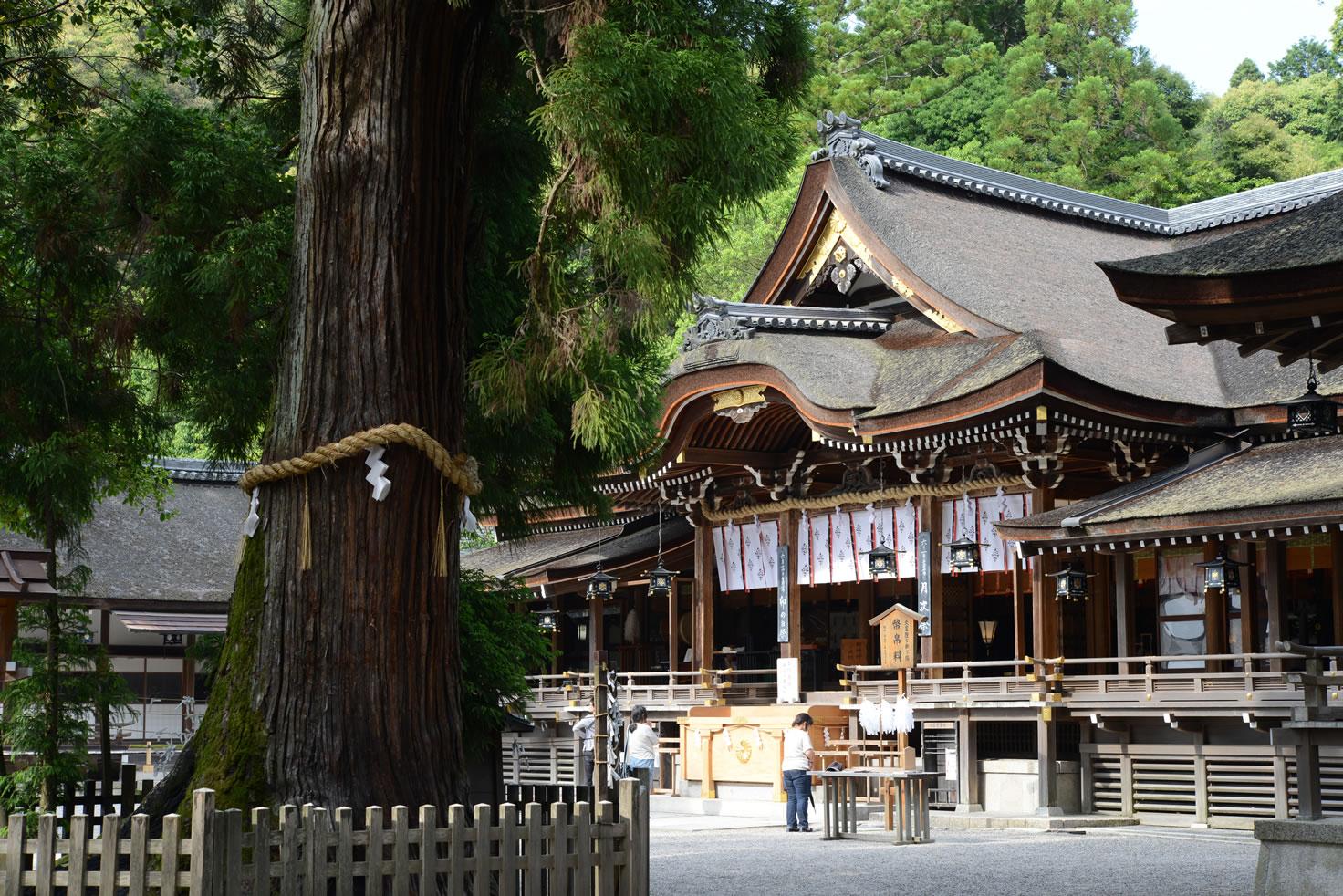 Nara City - Osaka / Kyoto
