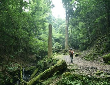 Walking Tour in Mt Kasuga Primeval Forest