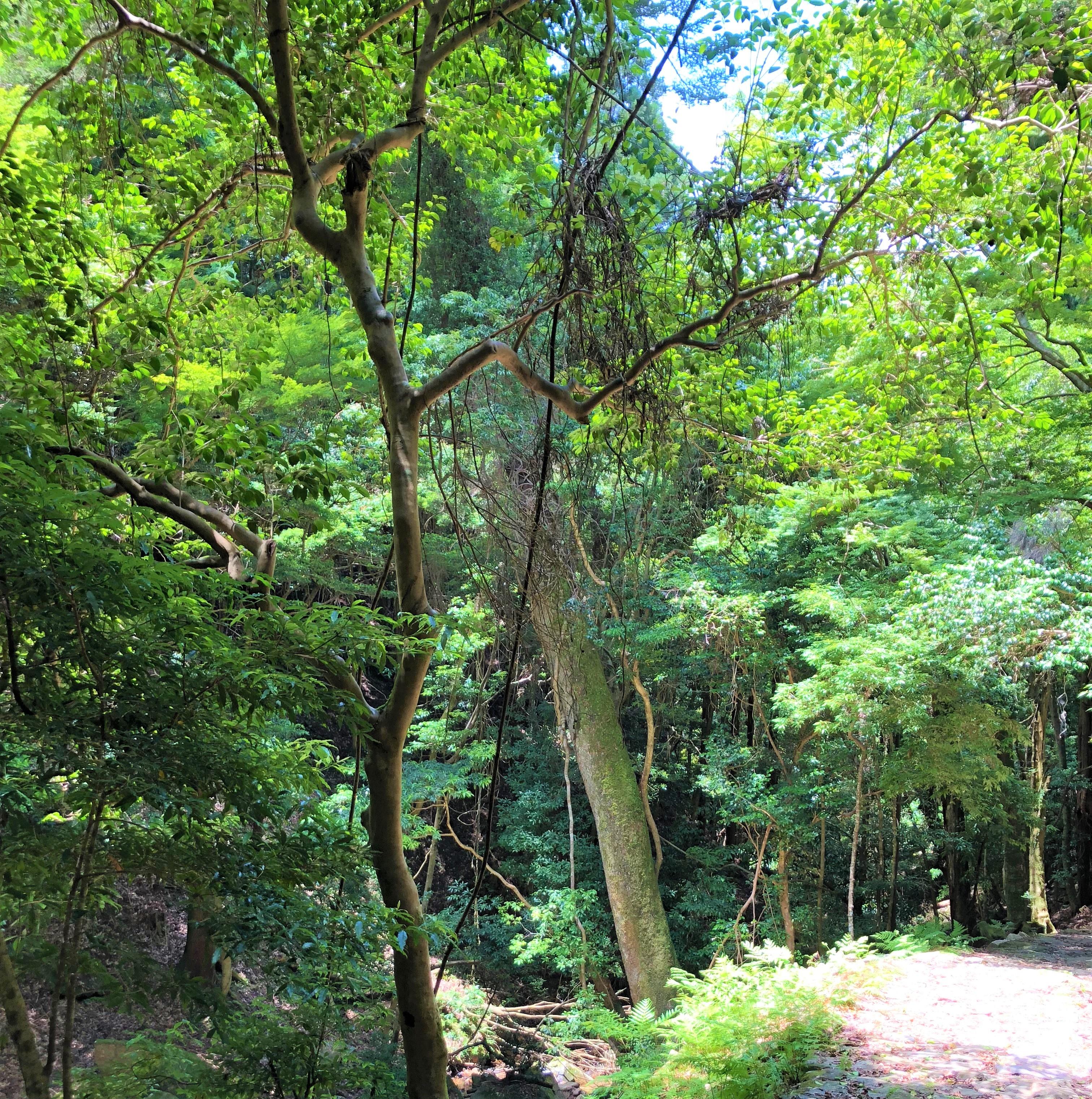 Yagyu Kaido Takisaka-no-Michi Path