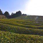 Yamato-cha, Nara's Japanese tea brand
