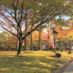 Recommendations for Autumn in Nara City