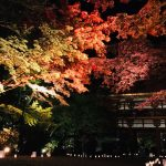 Light-up Autumn Foliage in Temple in Nara