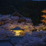 Special Entry Night at Tsubosaka-dera Temple
