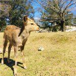 Nara Park today