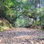 A Historical and Natural Path through Forest to Kasugataisha Shrine