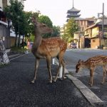 Deer in Town, Vol. 1