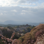Yoshinoyama Cherry Blossoms: Over 1,300 Years of History