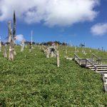 """UNESCO Biosphere Reserve """"Odaigahara"""" in Yoshino-Kumano National Park"""